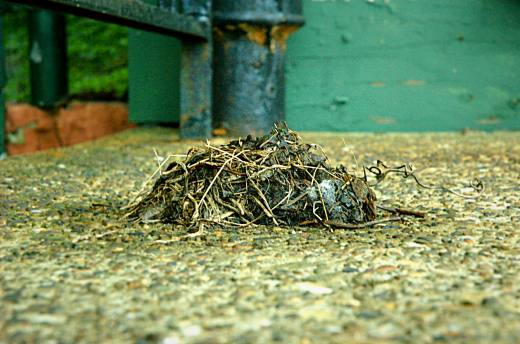 Dead's Bird Nest Shutter Speed - 1/5 Aperture - f29 Focal Length - 56mm